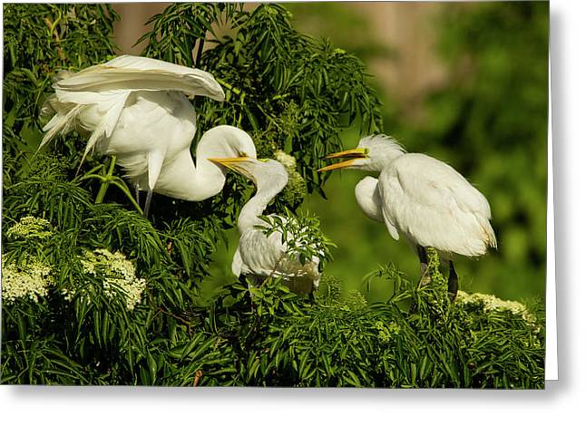 Usa, Florida, Gatorland Greeting Card by Jaynes Gallery