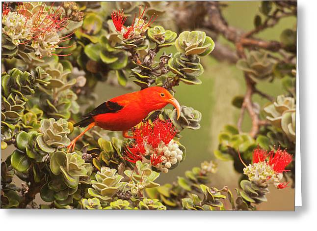 Usa Hawaii, Maui, Haleakala National Greeting Card