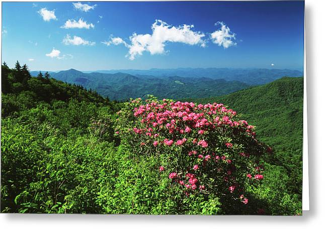 Usa, North Carolina, Pisgah National Greeting Card by Adam Jones