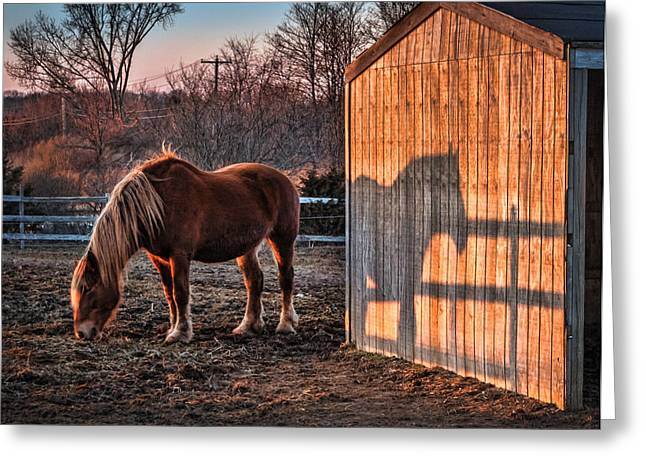 7056 Horse Shadow Greeting Card by Deidre Elzer-Lento