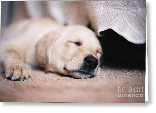 #708 20a Sleep Well Molly Sleeping Yellow Lab Labradore Greeting Card