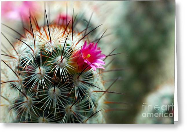 734a Tubular Cactus Flower Greeting Card
