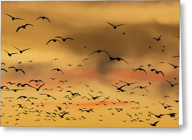Usa, New Mexico, Bosque Del Apache Greeting Card
