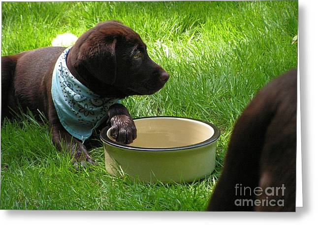 #740  D12 Chocolate Lab Donations Please Greeting Card
