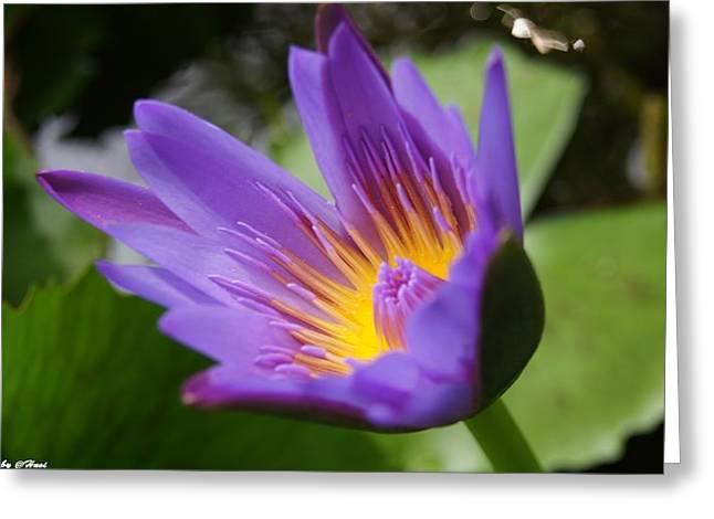 Lotus Greeting Card by Gornganogphatchara Kalapun