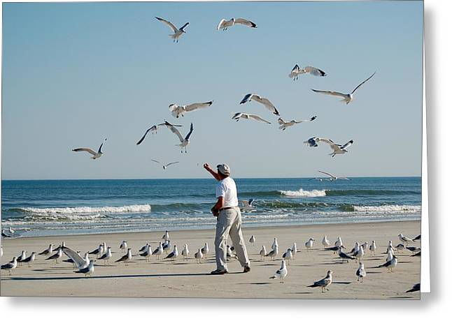 79 Seagulls Greeting Card