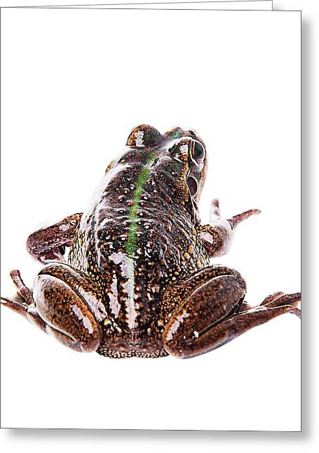 Amphibians On White Greeting Card by Shannon Benson