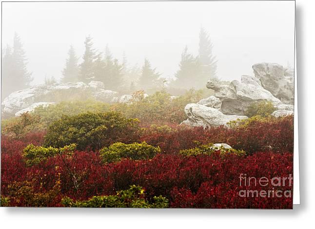 Autumn Fog Bear Rocks Greeting Card