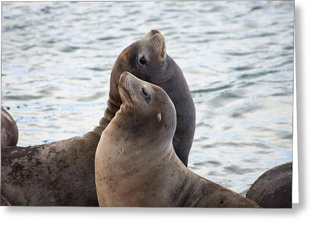California Sea Lions In Astoria Greeting Card