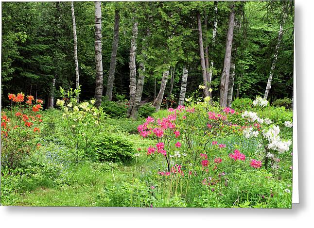 Canada, New Brunswick, Garden And Forest Greeting Card by Jaynes Gallery