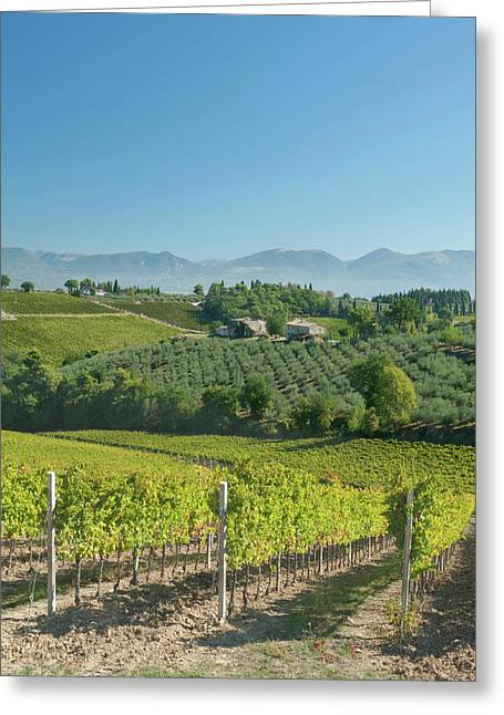 Europe, Italy, Umbria, Near Montefalco Greeting Card