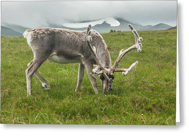 Europe, Scotland, Cairngorm National Greeting Card by Jaynes Gallery