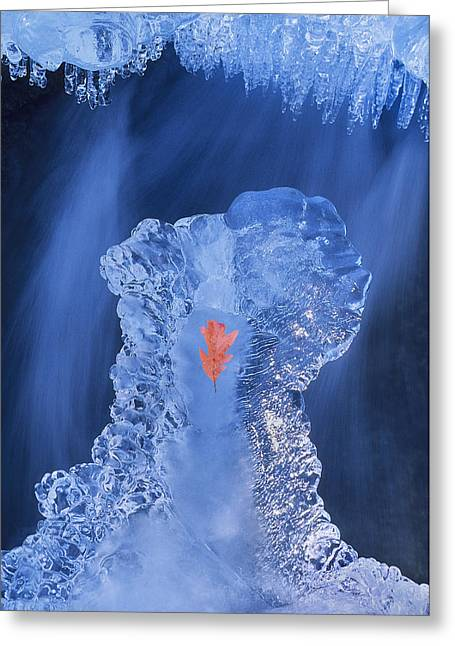 Frozen Beauty Aka Ice Is Nice IIi Greeting Card