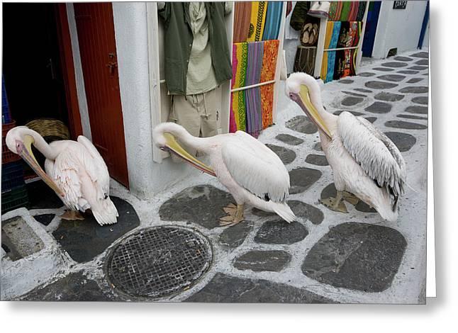 Greece, Mykonos, Hora Greeting Card