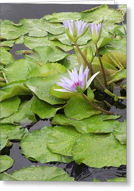 La, New Orleans, New Orleans Botanical Greeting Card