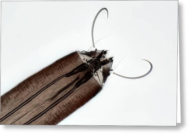 Mosquito Larva Greeting Card