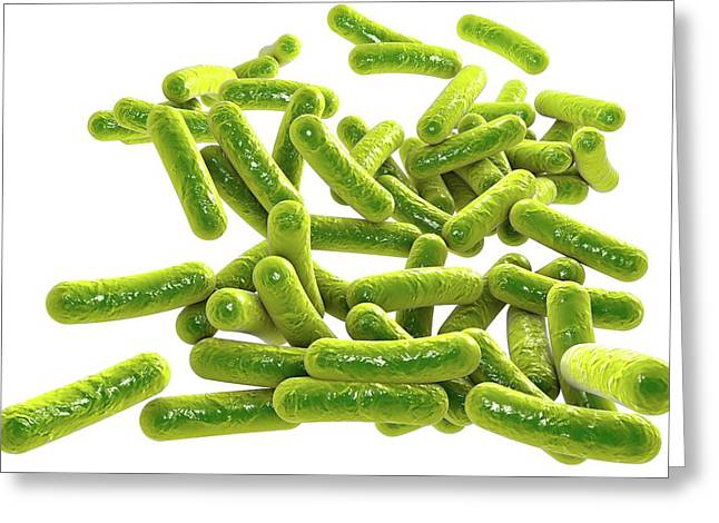 Rod-shaped Bacteria Greeting Card by Kateryna Kon