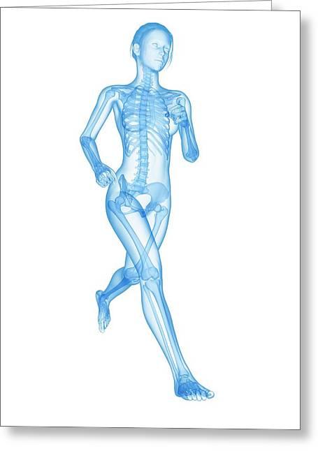 Skeletal System Of A Runner Greeting Card