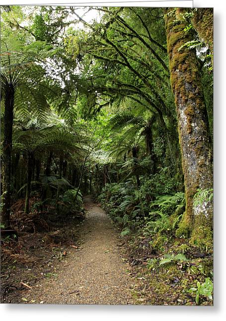 Tropical Forest Greeting Card by Les Cunliffe