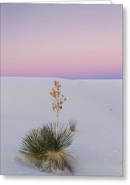 Usa, New Mexico, White Sands National Greeting Card by Jaynes Gallery