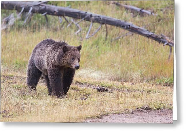Wyoming, Yellowstone National Park Greeting Card