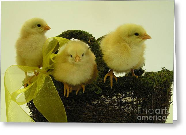 #801 D409 Chicks Rule Greeting Card