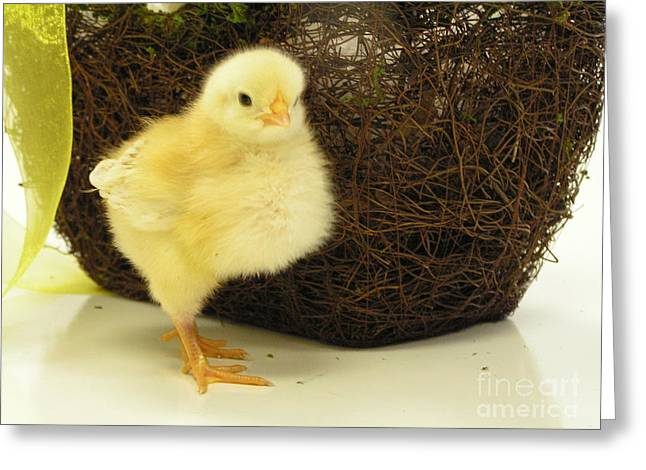 #801 D416 Super Proud Chick Greeting Card