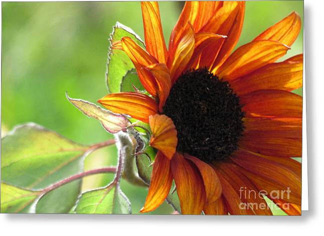 Greeting Card featuring the photograph Sunflowers  by France Laliberte