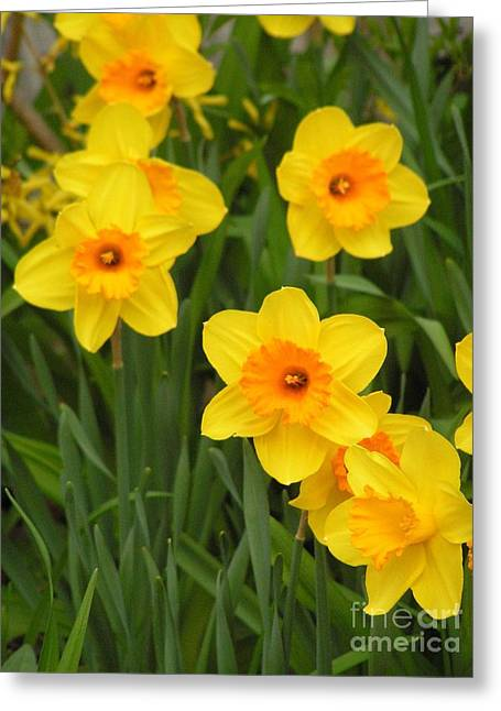 #848 D469 Daffodils Think Spring Greeting Card