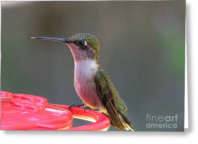 #869 D490 Before The Feast Hummingbird Greeting Card