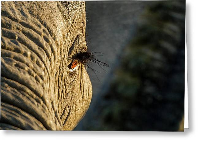 Africa, Botswana, Moremi Game Reserve Greeting Card