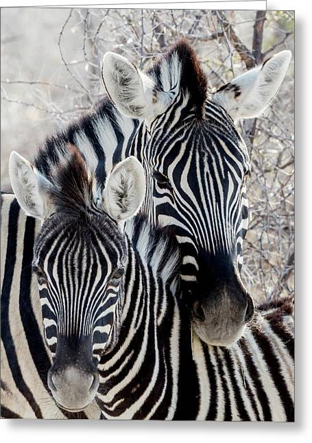 Africa, Namibia, Etosha National Park Greeting Card