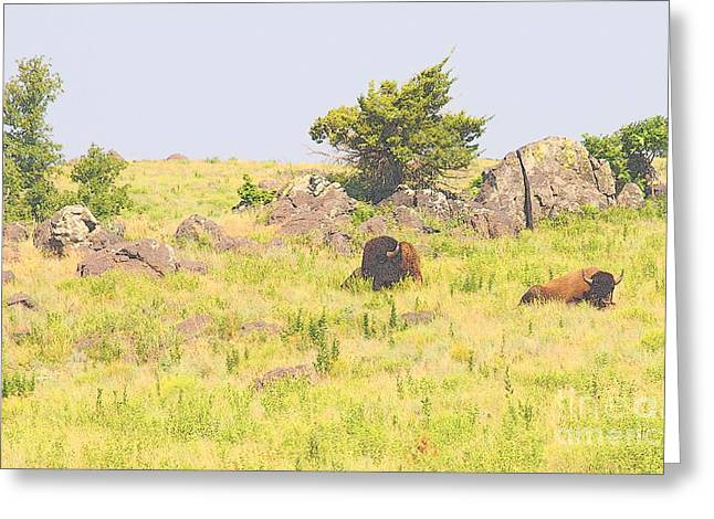 American Bison Greeting Card by Mickey Harkins