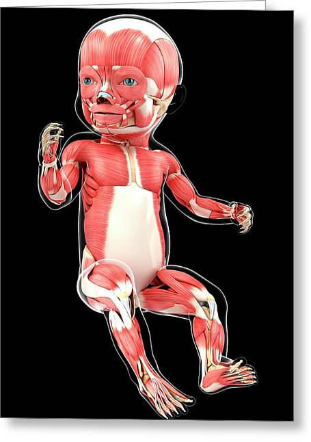 Baby's Muscular System Greeting Card by Pixologicstudio