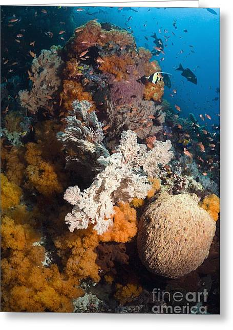 Coral Reef, Thailand Greeting Card