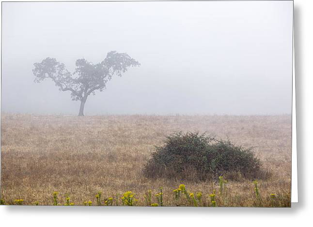 Cork Tree In Alentejo Greeting Card by Andre Goncalves