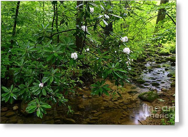 Cranberry Wilderness Greeting Card by Thomas R Fletcher