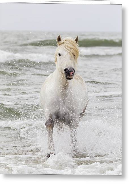 France, The Camargue Greeting Card