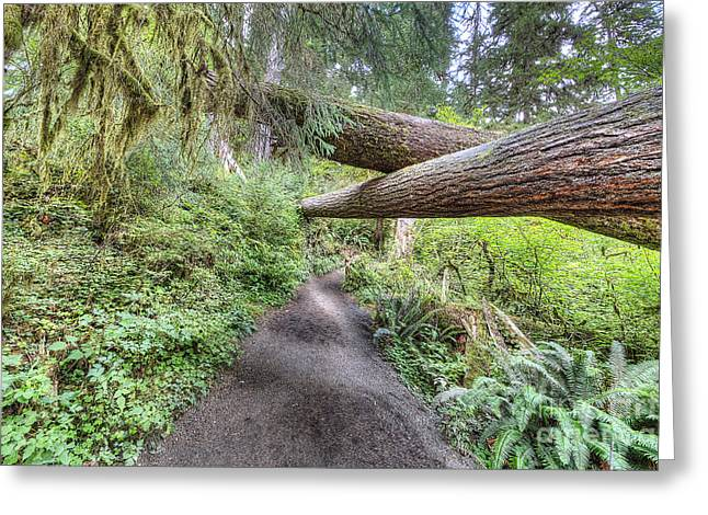 Hoh Rain Forest Greeting Card by Twenty Two North Photography