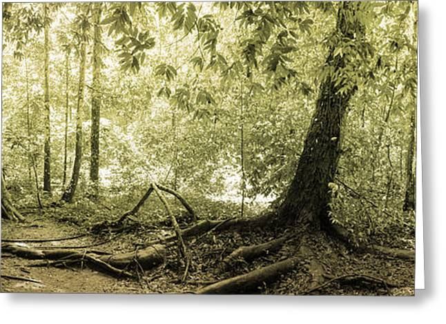 Panorama Of Rainforest Greeting Card by Atiketta Sangasaeng