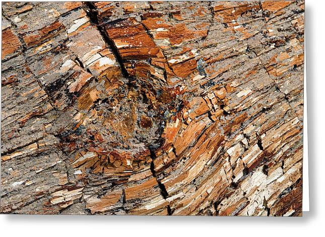 Petrified Forest, Monumento Nacional Greeting Card by Javier Etcheverry