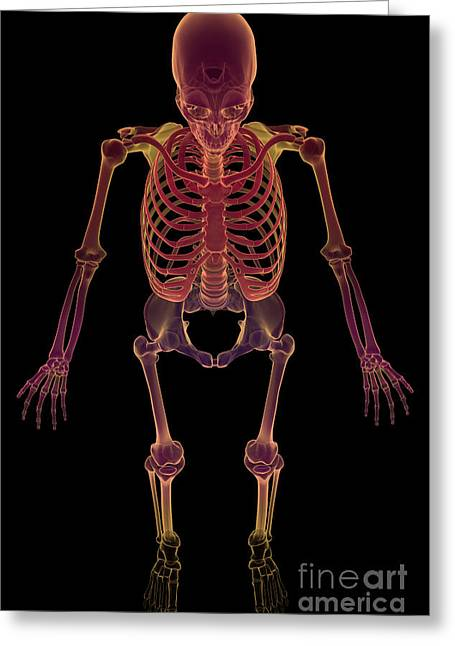 The Skeleton Greeting Card by Science Picture Co