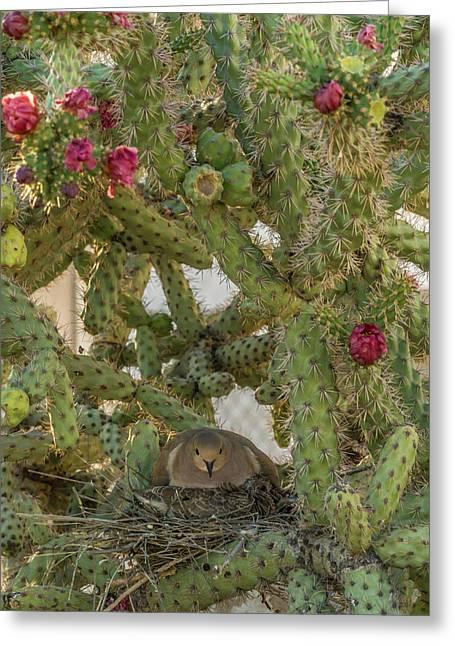 Usa, Arizona, Sonoran Desert Greeting Card
