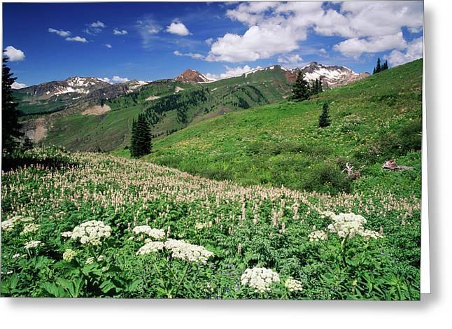 Usa, Colorado, Gunnison National Greeting Card