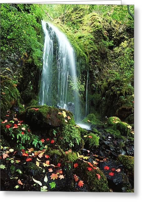 Usa, Oregon, Mt Hood National Forest Greeting Card