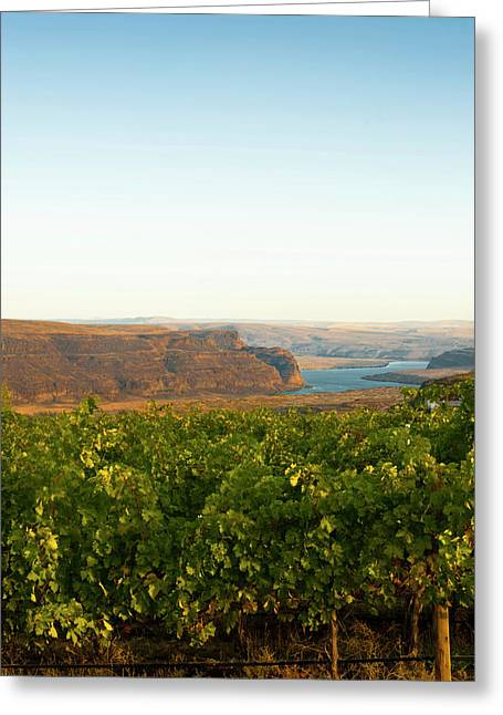 Usa, Washington, Columbia Valley Greeting Card