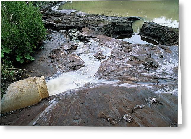 Water Pollution Greeting Card by Robert Brook/science Photo Library