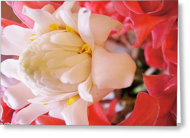 Flower For You  Greeting Card by Gornganogphatchara Kalapun