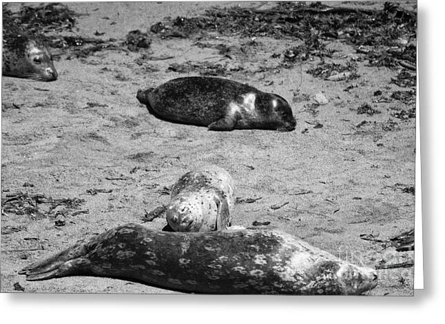 915 Bw  Mother And Baby  Greeting Card by Chris Berry