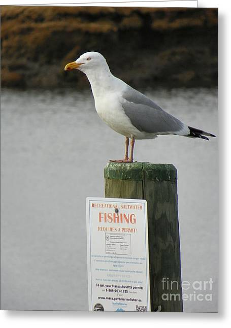 #927 D781 Gull On Salisbury Beach State Reservation Shoot Too Many Rules I Forgot My Wallet Greeting Card by Robin Lee Mccarthy Photography